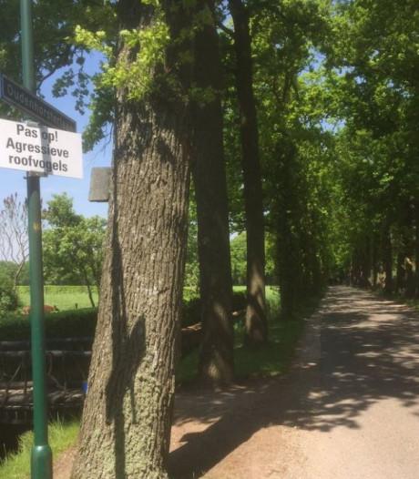 Woudenberg waarschuwt voor agressieve roofvogels