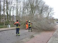 Code geel: brandweer rukt uit om omgewaaide bomen