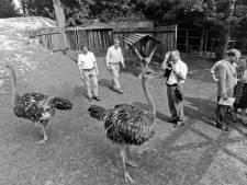 Groede zou best eigenaar kunnen zijn van een paar generaties struisvogels. Maar waar zijn die dan?