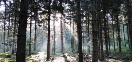 Onrust over zoekgebied bomen in Flevoland: wordt Urk ingesloten en omringd door een groot bos?