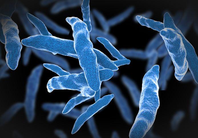 De tbc-bacterie.