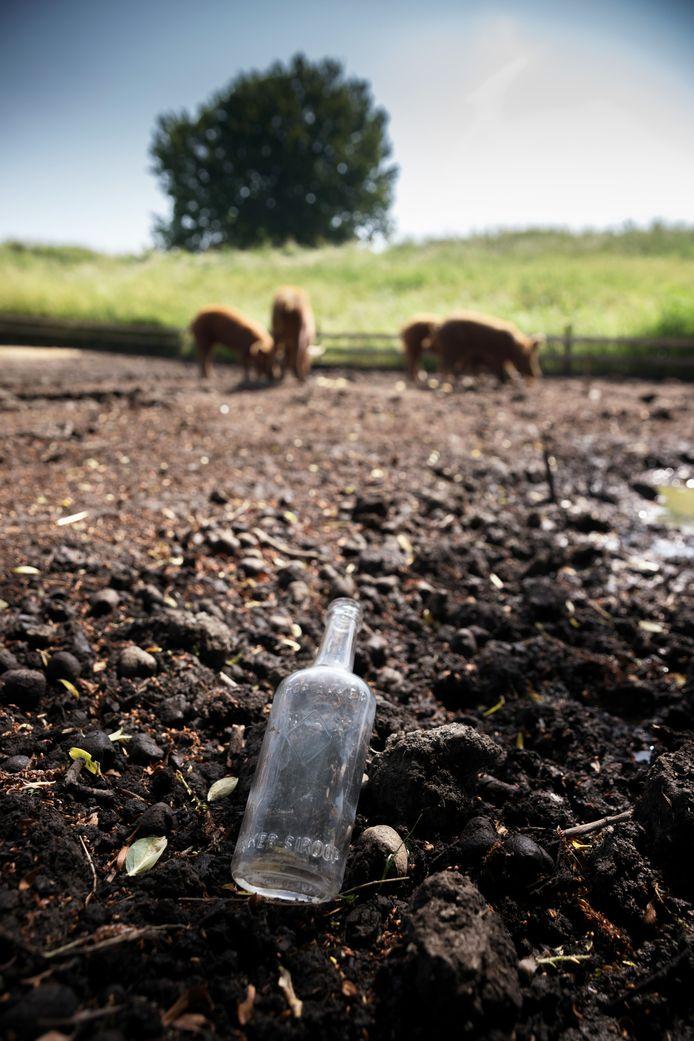 Het flesje op de plek waar de Tamworth-varkentjes het omhoog wroetten. Waarschijnlijk is het ooit leeggedronken door militairen.