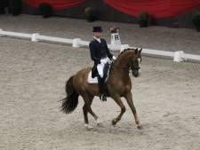 Complete Nederlandse subtop én Zeeuwen te bewonderen tijdens It's All Dressage