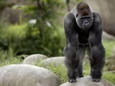 Opnames tv-serie begonnen in 'apetrots' Nagele, maar met welke aap?