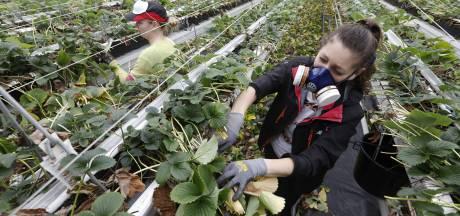 Explosieve groei ondernemers met een migratieachtergrond: 'Ze zijn eigenlijk niet zelfstandig, maar worden uitgebuit'