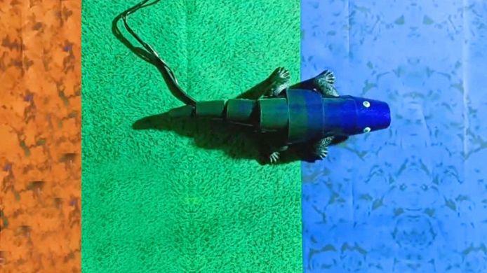 Des scientifiques ont créé un robot caméléon capable de changer de couleur.
