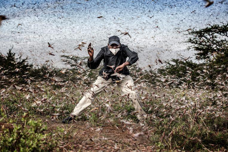 Luis Tato, Spanje: 'Fighting Locust Invasion in East Africa', gemaakt voor The Washington Post (genomineerd in de categorie Photo of the Year). Beeld