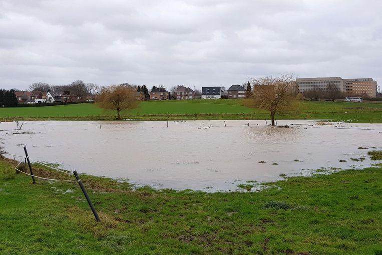 De Grote Weide deed haar werk als natuurlijk overstromingsgebied.
