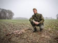 De raaf: een vogel met imagoprobleem, die zijn comeback maakt in Twente