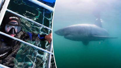 Vlaamse fotograaf reist naar een van beste plekken ter wereld om witte haai te spotten maar het gaat niet helemaal zoals verwacht