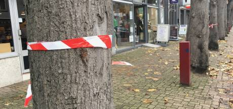 Actie tegen bomenkap in Made: 'Deze bomen horen bij de Marktstraat'