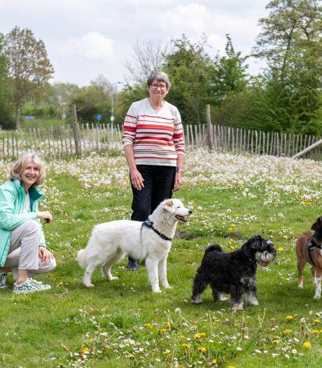 Hondenspeelplaats Middelburg snakt naar opknapbeurt: 'Broze puppybotjes niet bestand tegen val in kuilen'