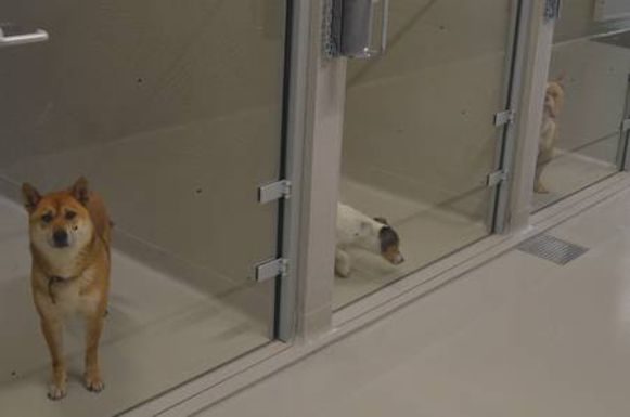De honden zijn veel rustiger sinds ze op de nieuwe locatie verblijven