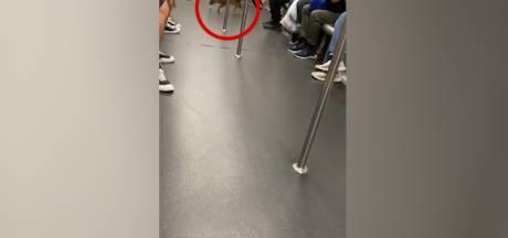 Un jeune sanglier sauvage s'offre un périple dans le métro de Hong Kong