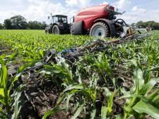 Mais groeit beter dankzij innovatieve mestmachine
