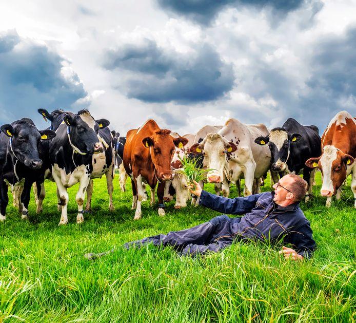 Boer Gerrit de Graaf (56) in het weiland met een deel van zijn 100 koeien. Nadat het stroomdraad een meter is verzet, eten de koeien direct van het verse gras.