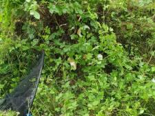 21 cavia's gevonden in sloot bij het Lutterzand: 'Was er dan echt geen andere oplossing?'