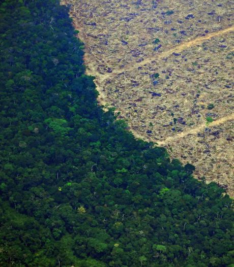 """Situation """"préoccupante"""" en Amazonie: près de 8.500 km2 de forêt déboisés en 2020"""