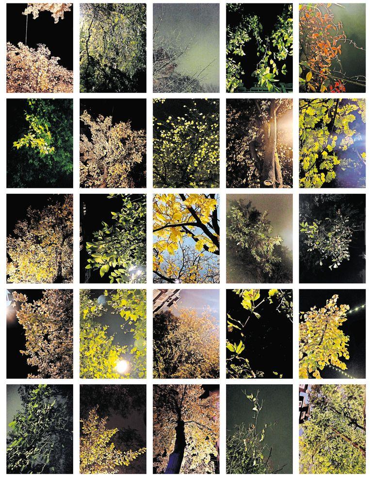 Elke avond wandelt kunstenaar Maartje Jaquet door de steeds leger wordende stad. Boven de stille straten dansen volgens haar de nachtbomen, waarvan je de bladeren hoort ritselen in de wind – alsof ze nu, in deze stilte, extra genieten.  Beeld editie
