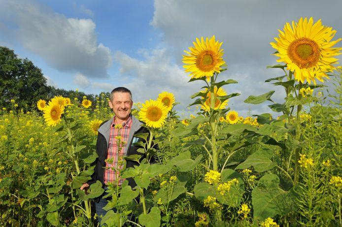 Kees Hanse tussen de 3 hectare zonnebloemen aan de Zandweg, vlakbij Zierikzee.