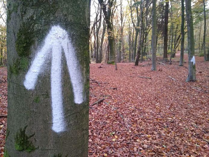 Pijlen in het bos bij Doorwerth.