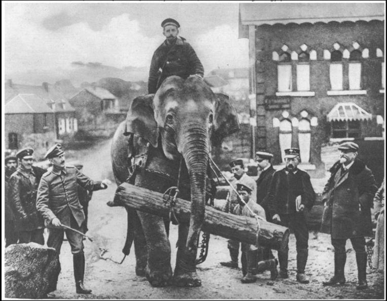 Olifant Jenny hielp de Duitse soldaten tijdens de Eerste Wereldoorlog. Beeld rr