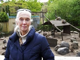 """Jane Goodall: """"Doodgeschoten gorilla legde arm rond kind"""""""