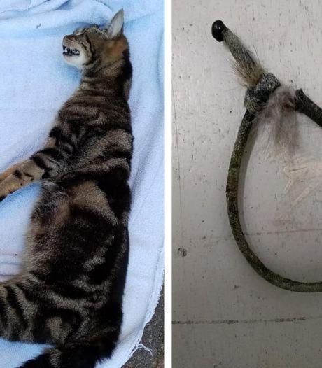 Gruwelijke vondst in Lelystad, hoogzwangere kat aan brievenbus opgehangen: 'Echt vreselijk'