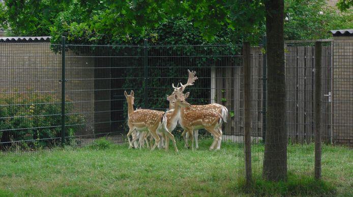 De hertenkamp in Schoonrewoerd.