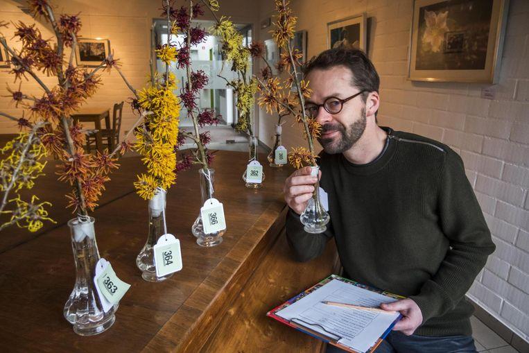 Arboretum-directeur Bram Rammeloo keurt een takje van de toverhazelaar.