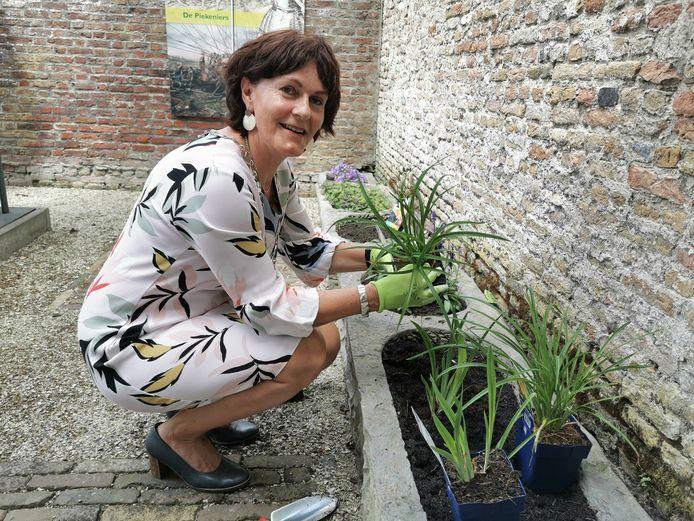Burgemeester Marga Vermue plant lelies op de binnenplaats van museum Het Bolwerk in IJzendijke.