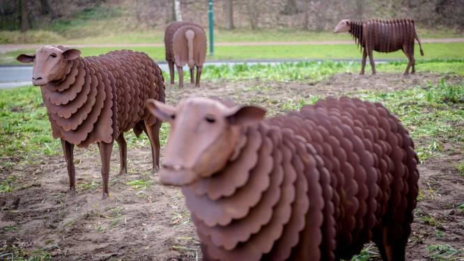 Trots op stalen schapen op rotonde in Geldrop