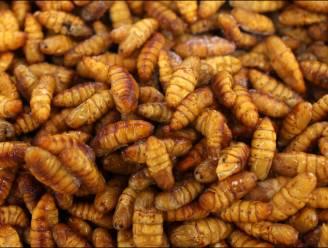 Twee op drie Vlamingen willen geen insecten als vleesvervanger op hun bord