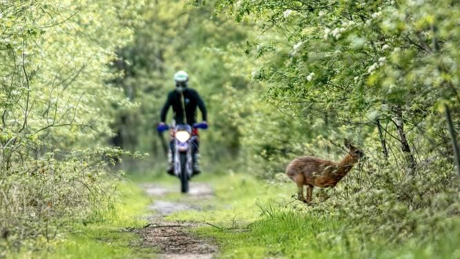 Fotograaf legt probleem natuurgebieden op juiste moment vast: ree op de vlucht voor motorcrosser
