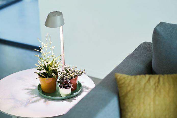 Een lamp kan planten nét een beetje extra geven.