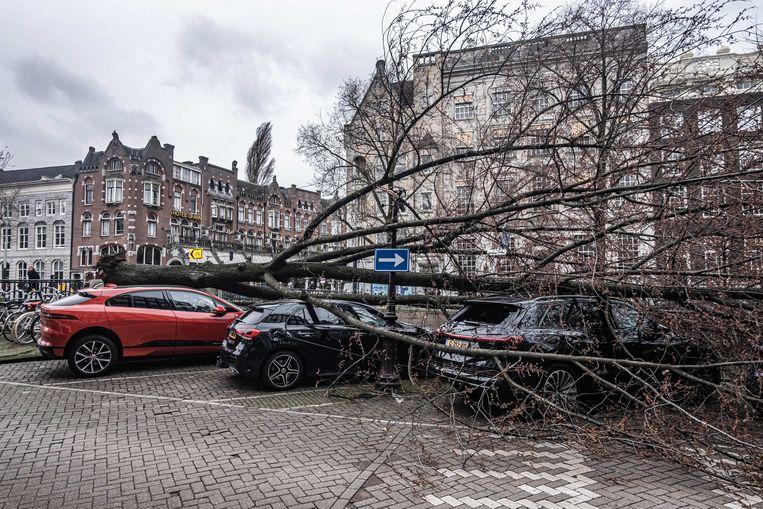 Een grote boom is in Amsterdam bovenop een aantal geparkeerde auto's gevallen tijdens de eerste storm van 2021. Beeld ANP
