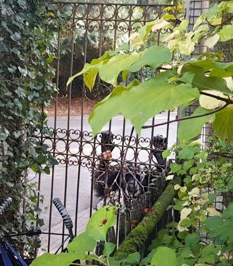 Waarom nemen dierenclubs DierenPark op de korrel om dood chimpansees? De feiten op een rij