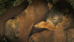 Wat een verwennerij: eekhoornjongen genieten van luilekkerleventje