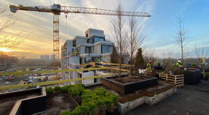 Ook op de daken van de nieuwe woonblokken van Nieuw-Zuid zelf wordt er aan vergroening gedacht.