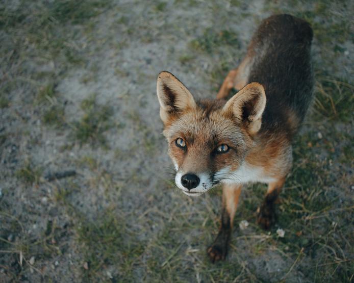 Na de zich uitrekkende vos kreeg fotografe Mylène Sopacua de smaak te pakken.