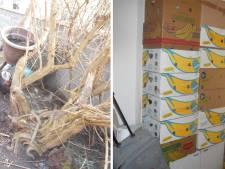 Rongeurs entassés, poules déplumées et maigres... Triste découverte à Charleroi