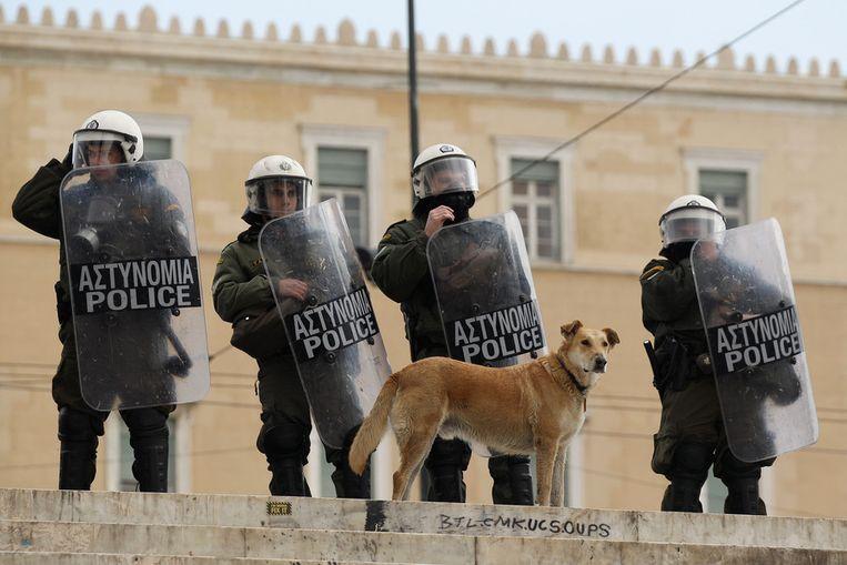 Recenter beeld: Loukanikos op 17 februari van dit jaar. © Getty Images Beeld