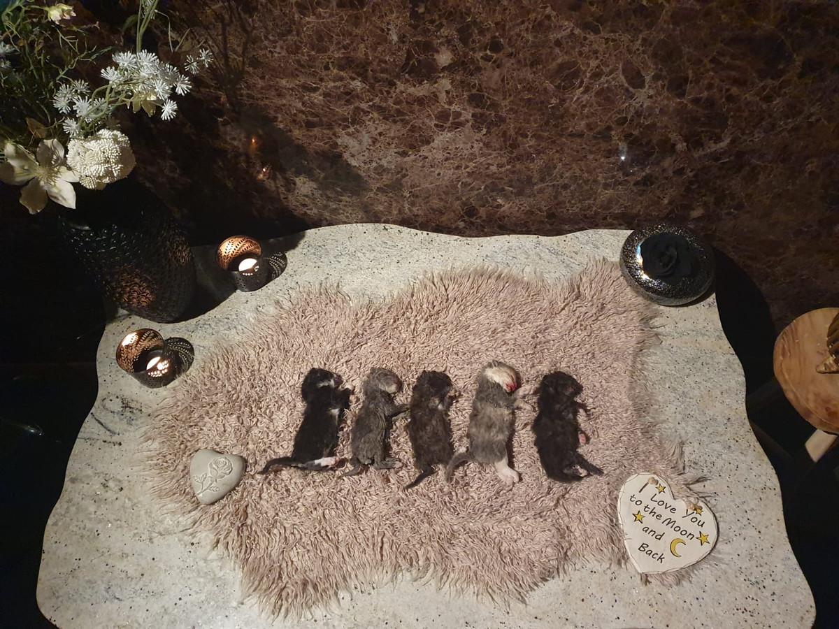 De vijf jonge kittens die met geweld om het leven zijn gebracht.