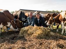 Boerenechtpaar in Haaksbergen opent biomelktap en legt buitenbed aan voor koeien