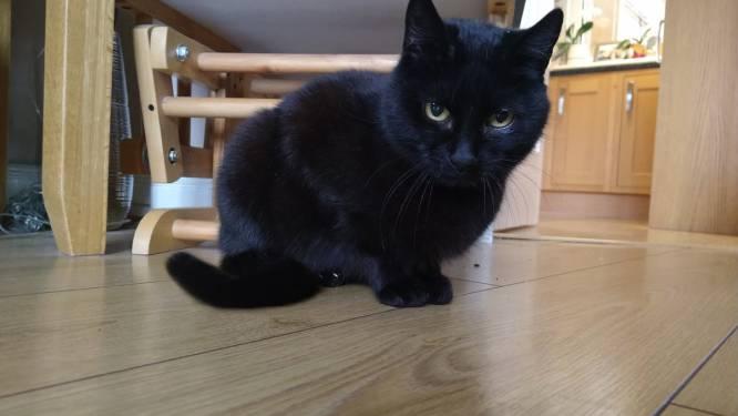 Verdwaalde kat na vier jaar terug herenigd met eigenaars