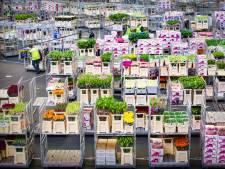Oppositie niet enthousiast over plannen voor Flora-terrein: 'Algemeen en niet concreet plan'
