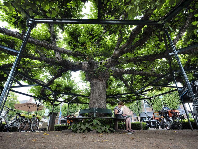 De Moeierboom in Etten-Leur. Beeld Mark Kohn