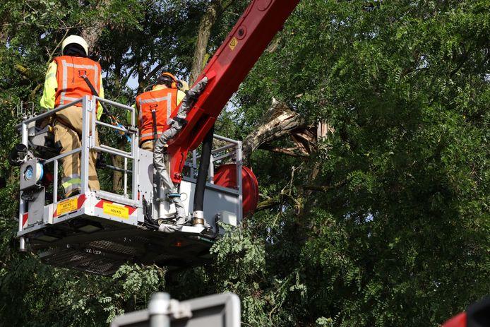 Afgebroken tak blijft hangen in boom Nijnsel.
