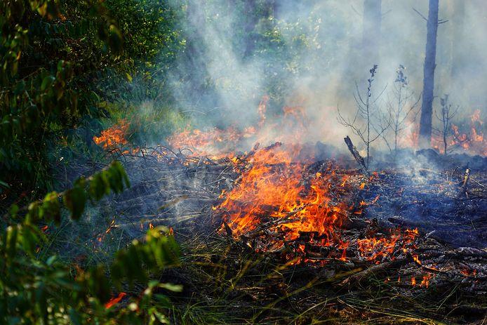 Er was sprake van een zeer grote brand.