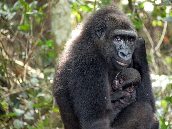 Mama Mayombe met haar kersverse spruit (1/3).